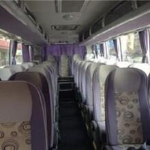 客车)青岛到邢台的直达客车票价比较优惠图片