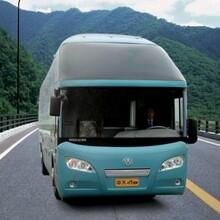 从高密到石家庄的直达客车每天加班车图片
