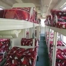 客車平度到成武的臥鋪汽車票價準點發車圖片