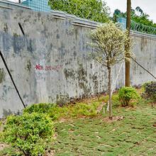 清溪专业园林绿化工程哪里有园林绿化工程图片