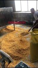 玉米压片机