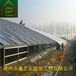 鑫艺农温室光伏温室大棚光伏温室安装温室大棚骨架材料