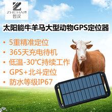 太阳能GPS定位器牛羊马大型动物定位项圈牧场防盗防水无线