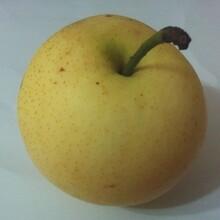 梨树苗新品种哪里有3公分梨树苗价格绿宝石梨树苗价格图片