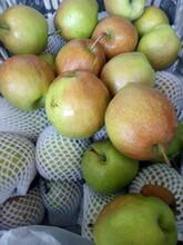 陕西榆林皇冠梨树苗适合哪里种植红香酥梨树苗几月份出售图片