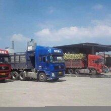 上海陶粒厂家直销,免费送货上门图片
