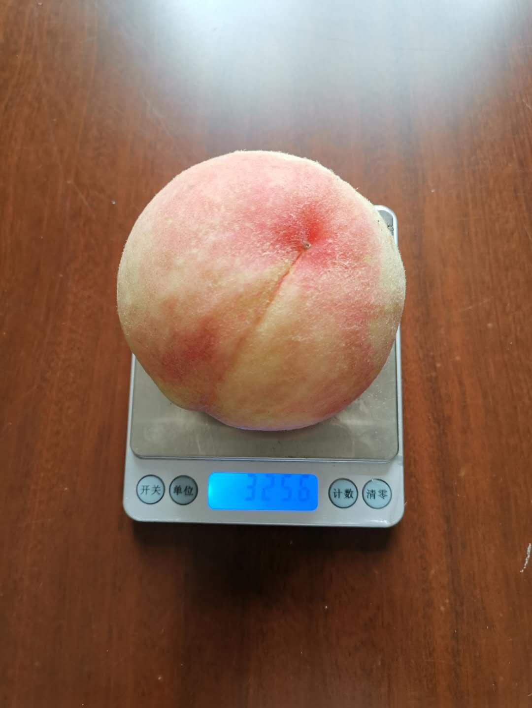 湖南湘西水蜜桃苗,水蜜桃苗廠家直售