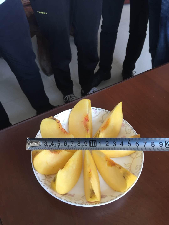 十堰桃樹苗_供應桃樹苗_高成活率桃樹苗