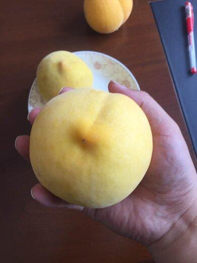 六盤水桃子種苗_嫁接桃樹苗_桃樹苗基地