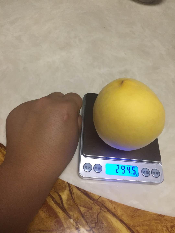 綿陽黃桃果苗_肉質金黃綿陽桃樹苗_成熟早的桃樹苗