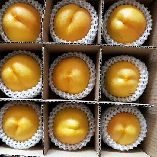 重慶萬盛黃桃果苗,黃桃果苗基地,桃樹苗高產管理