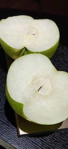 四川巴中梨子果苗,梨子果苗出售,肉質細膩的梨子苗