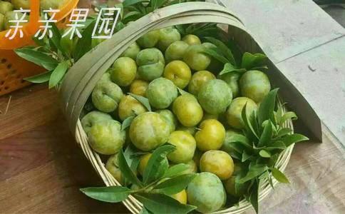 蜂糖李樹苗,江西新余蜂糖李樹苗,成熟晚的李子苗