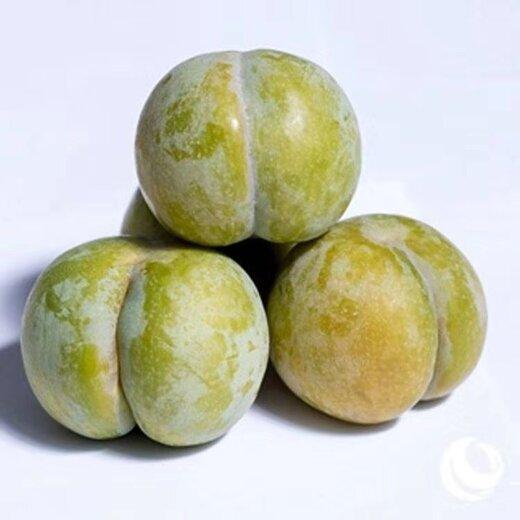 蜂糖李果苗,湖南郴州蜂糖李果苗,廠家培育李子苗