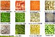 荷蘭OS歐艾斯新鮮或者冷藏馬鈴薯產品,蔬菜或水果產品光學分選機