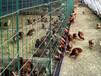 荷蘭網養殖圍欄動植物圍欄養殖荷蘭網