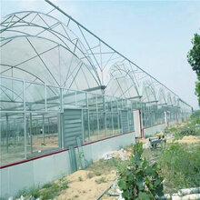 连栋玻璃温室建造联动薄膜大棚造价连栋温室大棚厂家旭航温室图片