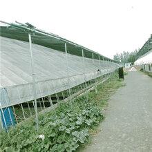 新型日光温室设计日光温室大棚安装日光温室工程公司旭航温室图片