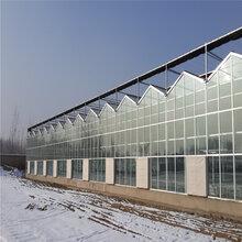 育苗温室大棚价格江苏养殖温室工程养殖钢架大棚价格旭航温室
