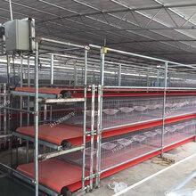 自动化养殖设备厂家鸽子养殖清粪机白鸽送料机传输带养殖机