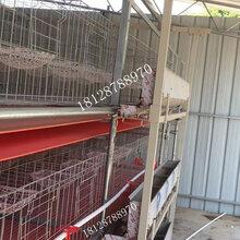 供应不生锈冷镀锌鸽笼热镀锌鸽子笼鸽笼厂家正谷