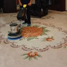 普陀区专业从事地毯清洗服务地毯清洗图片