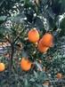 臍橙防蟲網蔬菜防蟲網預防黃龍病抗氧化耐腐蝕