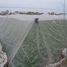新型的農用覆蓋材料臍橙防蟲網蔬菜防蟲網防蟲防霜凍圖片
