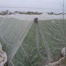 新型的农用覆盖材料脐橙防虫网蔬菜防虫网防虫防霜冻图片