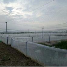 廠家專業生產青蛙養殖圍網青蛙養殖網抗老化耐高溫抗寒圖片