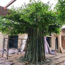 水泥包柱大树