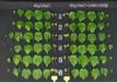 衡陽肥料用Y氨基丁酸價格