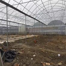 双层膜大棚的建造、临沂市养殖大棚、连栋玻璃温室