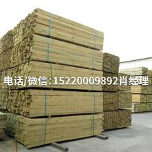 滿洲里工廠批發俄羅斯樟子松防腐木圖片