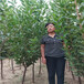 早熟李子苗自主繁育帶土球價格