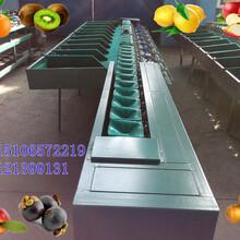核桃重量選果機,按照重量分選核桃大小的選果機,云南核桃自動分選機山東供應商圖片