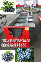 新型蓝莓选果机厂家,山东蓝莓选果机厂家图片