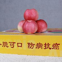 張家界蘋果批發價格圖片
