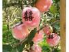 贛州奇緣清蘋果