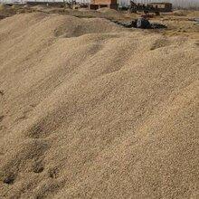 盐城黄沙哪家好图片