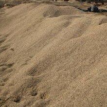 苏州专业从事黄沙供应商沙子图片