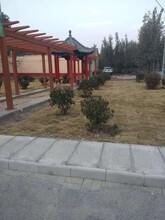 江苏专业承接仿木长廊安装报价施工公司图片