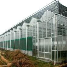 贵州哪里有玻璃大棚批发图片