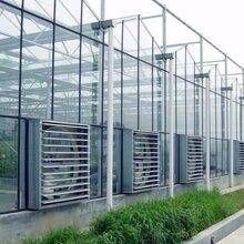 文洛型智能玻璃温室