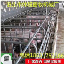 厂家直销养猪定位栏母猪固定栏限位栏定制加工