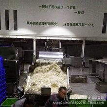 果蔬杀菌线不锈钢网链输送机定制豆芽清洗机大型全自动豆芽机图片