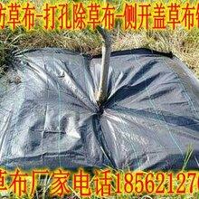 安徽淮北打孔防草布适用有机作物栽培/厂价供货