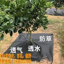 安徽六安指定打孔除草布供应厂家/专业加工除草布打孔切片