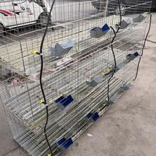 商品兔籠價格九位子母兔籠全國發貨養殖籠具圖片