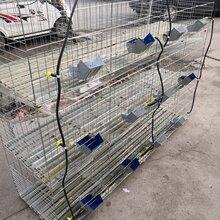 商品兔笼价格九位子母兔笼全国发货养殖笼具图片